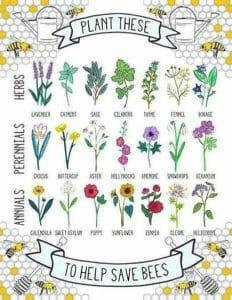 pomagamy pszczolom ziola po angielsku