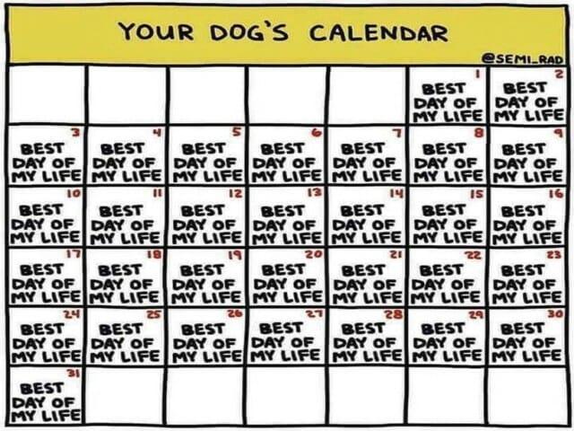 dni tygodnia days po the week pies psa