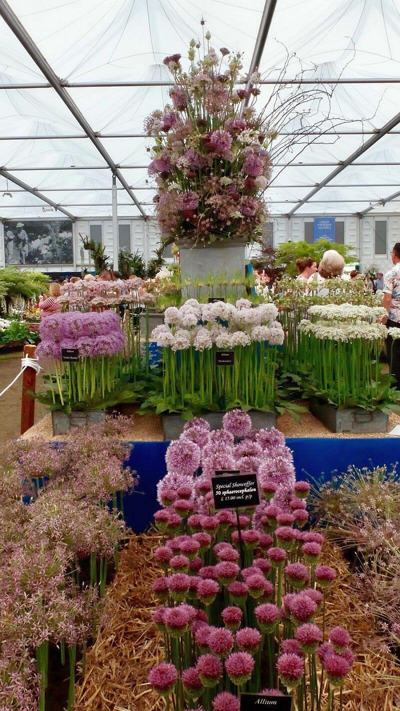 chelsea flower show angielski londyn