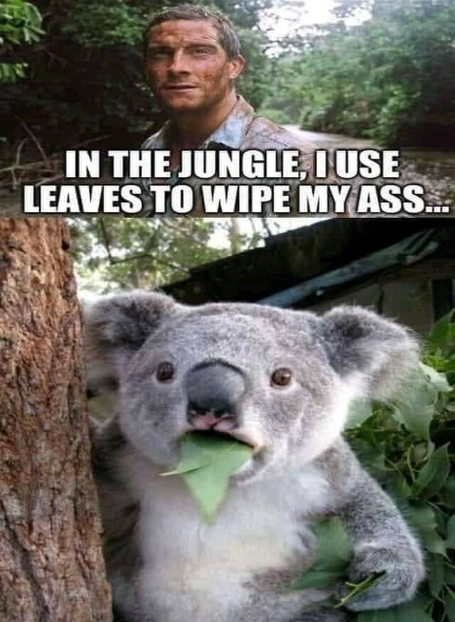 use, usedt to, koala