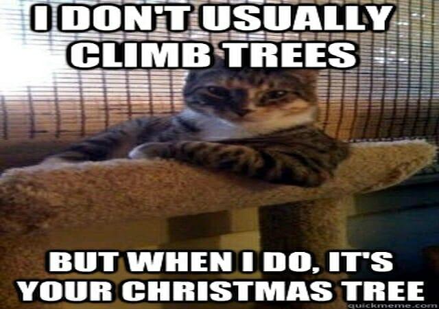 śmieszne memy z kotami i choinką