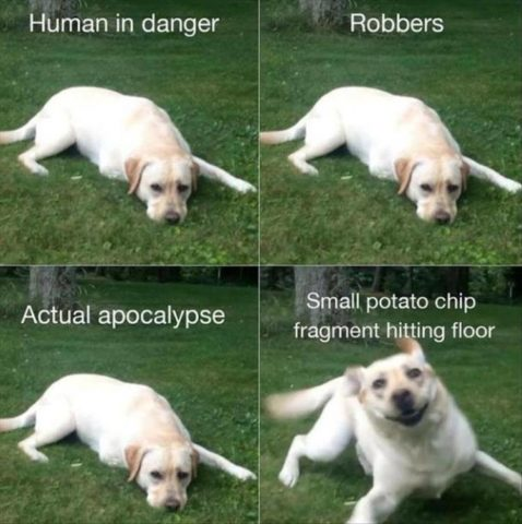 słodkie memy z psami, po angielsku, okruszek, apokalipsa