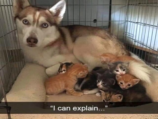 słodkie memy z psami