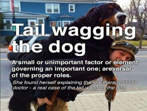angielskie idiomy z psami