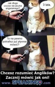 kurs jezyka angielskiego online speakingo i kot