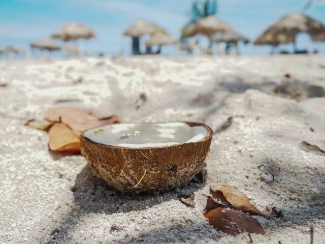the da coconut song, piosenka o kokosie