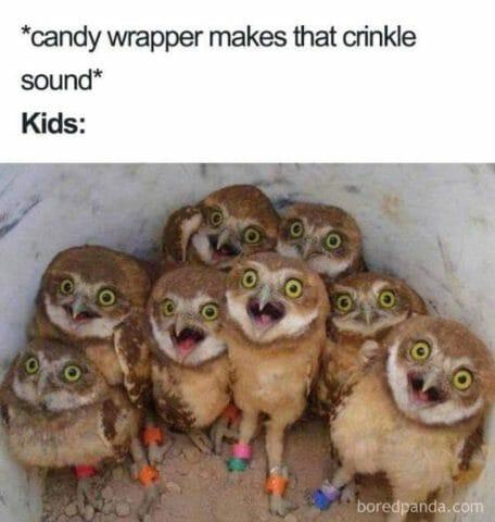 opakowanie, cukierki, sowy memy o rodzicielstwie dzieciach i rodzicach po angielsku