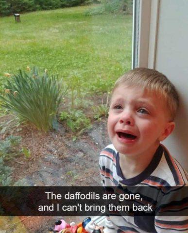 żonkile, narcyzy, ogród, Płaczące dzieci w śmiesznych memach po angielsku