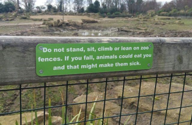 emfaza emphasis zoo angielski