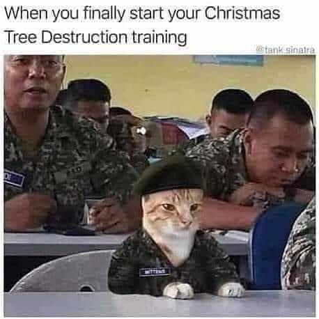 smieszne memy z kotami choinką wojsko armia trening musztra