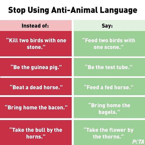 peta, obrońcy praw zwierząt, gatunkizm, dyskryminacja gatunkowa, idiomy ze zwierzętami, powiedzenia ze zwierzętami