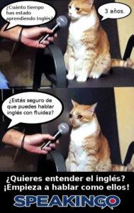 gato habla curso de ingles online
