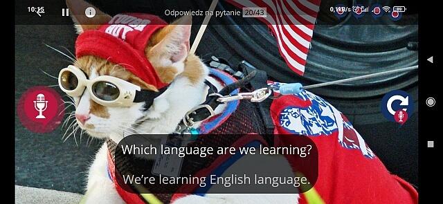 najlepsza aplikacja do nauki języka angielskiego, iphone, android, kot