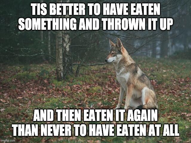 then than pies wilk jeść